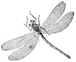 Small Picture Printable Dragonfly Coloring Pages For Kids Kids adult