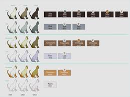Cat Coat Color Chart Genetics Of Coat Colour And Pattern Tonkinese Cats