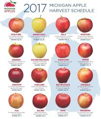 Apple Variety Chart Pin By Gail Yarger On Food In 2019 Apple Varieties Best