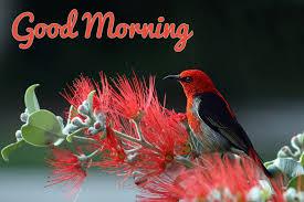 pink bird good morning wallpaper 26802