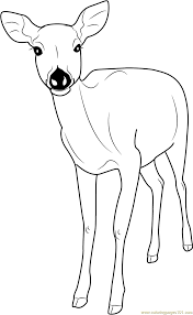 Small Picture Deer Coloring Pages Coloring Page