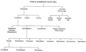 Eukaryotic Plant Cell With Diagram