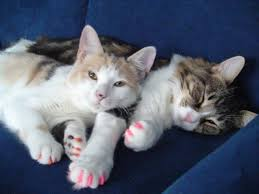 plastic nails for cats