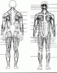 Small Picture Arm Muscles Anatomy Coloring Pages Dpt Pinterest Arm muscle