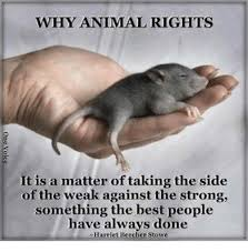 fifty things animals cant do pulplesscom do animals have rights essay