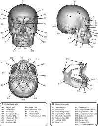 Small Picture Skull Anatomy Coloring Page The anatomical landmarks of Xray