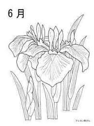 6月花しょうぶの花の塗り絵の下絵画像 Coloring Pages 花の塗り絵