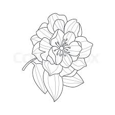fully open peony flower monochrome drawing for coloring book hand drawn vector simple style ilration stock vector colourbox