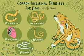 Common Worms And Intestinal Parasites In Dogs