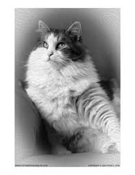 Small Picture Grayscale coloring page of a cat This Siberian cat is ready for