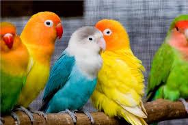 birds wallpaper. Contemporary Birds Lovely Birds Wallpaper  Download To N