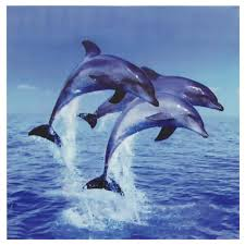 three rising dolphins canvas wall on dolphin canvas wall art with oriental furniture 32 in x 32 in three rising dolphins canvas
