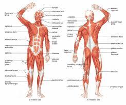 Human Body Diagram Printable | Diagram Site