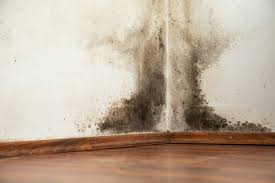 how to remove black mold from walls