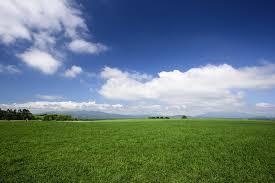 grass field. Blue Sky Green Grass Field Summer Landscape