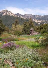 located on 65 acres in the foothills just above the city the santa barbara botanic garden features exquisite exhibits of california native plants displayed