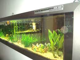 wall mounted fish tank review