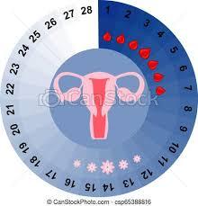 Menstrual Cycle Calendar