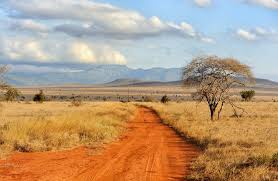 Ecologists In Africa British Ecological Society