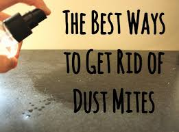 12 Guaranteed Ways to Get Rid of Dust Mites in Your House | Dengarden
