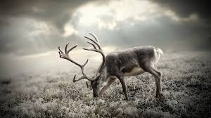 cool hunting backgrounds. 1920x1440 Hunting Wallpaper, Full HD 1080p, Best Backgrounds Cool R