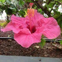 Lidia Hamm (lidiahamm) – Profil   Pinterest