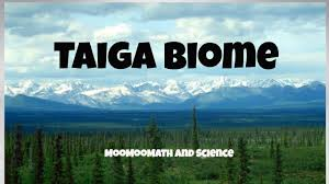 What Are Biomes Taiga Biome Facts