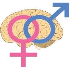 male and female brains wired differently the scientist magazine® minime 12358update