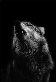 black and white wolf howling photography. Delighful Howling Beautiful Black And White Photo Of A Wolf Howling U003c3 Found This On My  Friends Profile I Had To Take It 3 Inside Black And White Wolf Howling Photography O