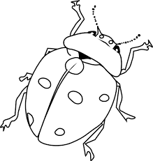 Small Picture Insect Coloring Pages Bug Coloring Pages In Animals Coloring Style