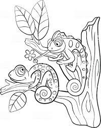 Libri Da Colorare Animali Selvatici Due Piccoli Graziosa Camaleonte
