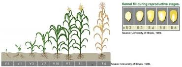 Agronomic Info Tools Details Dekalb