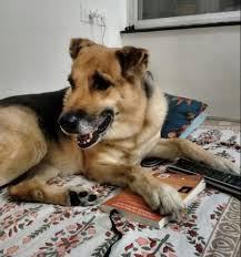 dogsindia missing dog