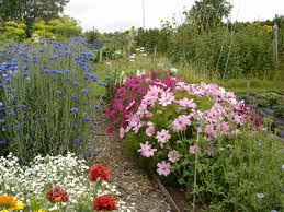 cutting flower garden design awesome grow your own cut flowers