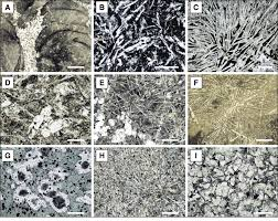 photomicrographs of igneous textures preserved in the volcanic rocks a curved perlitic fractures