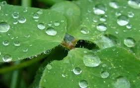 Αποτέλεσμα εικόνας για σταγόνες βροχής