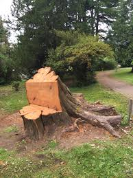 Tree Stump Seats Trees Budding News