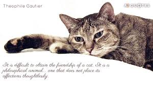 Quotes About Pets And Friendship Impressive Download Quotes About Pets And Friendship Ryancowan Quotes