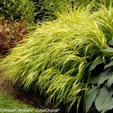 10 fantastic low maintenance plants for