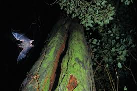 Are Bats Blinded By Light The Remarkable World Of Bats New Zealand Geographic