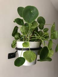ufo 2 wall mount hanging plant holder