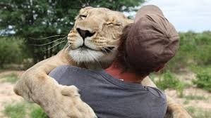 lion who became friends valentin gruener seen together in  lion who became friends valentin gruener seen together in hug daily mail online