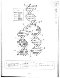 Dna replication coloring worksheet on dna coloring worksheet answer rh pinterest dna structure and function