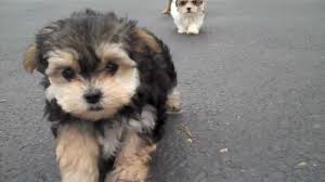 cute puppies for sale. Exellent Sale To Cute Puppies For Sale R