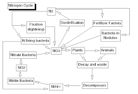 Environmental Biology Sequence Ecosystems