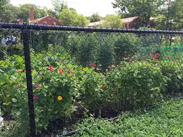 community gardening. Arlington\u0027s Interest In Gardening Has Taken Root! Over The Last Few Years, Number Of People Wanting A Community Garden Plot Arlington More Than