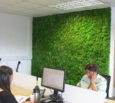 green wall office. simple wall moss wall in an office  preserved bun intended green