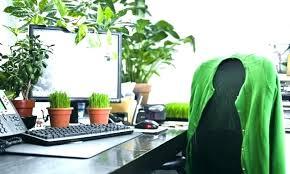 best indoor office plants small best indoor plants for low light office