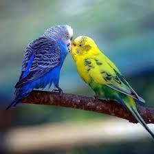 Shanna Bird (pheniex) - Profile | Pinterest