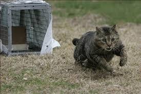 Come catturare un gatto randagio | Guide pratiche | Benessere | Magazine